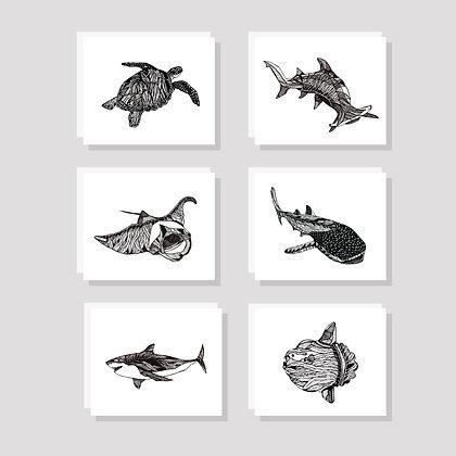 Kelp Sea Animals Card Set (Pack of 6)