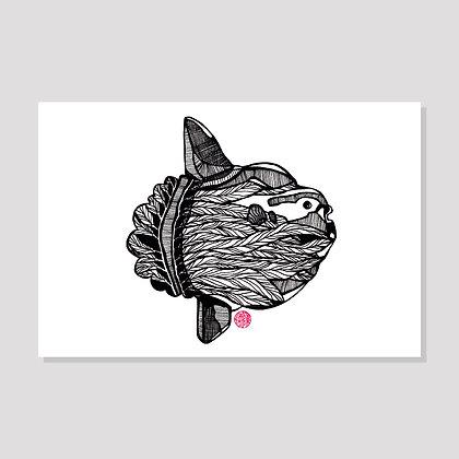 Ocean Sun Fish Postcard