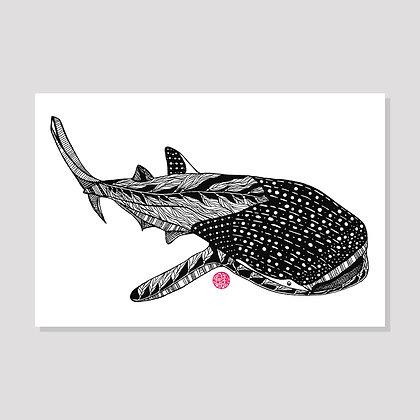 Whale Shark Postcard