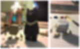 Screen Shot 2020-02-02 at 9.16.24 PM.png