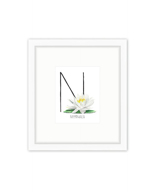 Nymphaea Letter