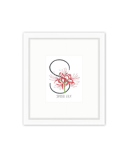 Spider Lily Letter