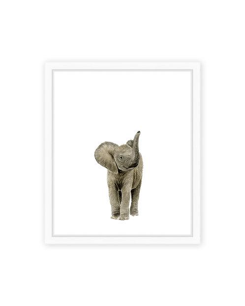 Original Elephant Calf