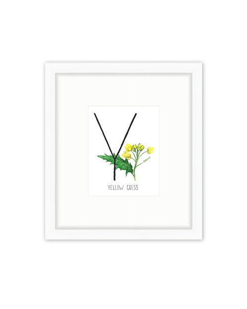 Yellow Cress Letter