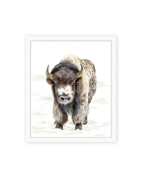 Snowy Buffalo Print