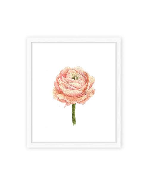 Ranunculus Print