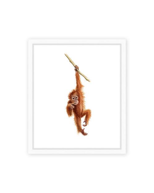 Original Baby Orangutan