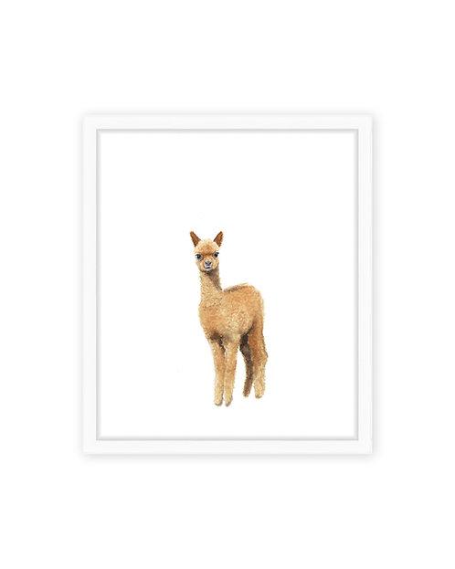 Original Alpaca