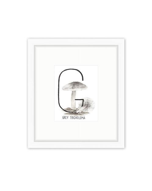 Grey Tricholoma Letter