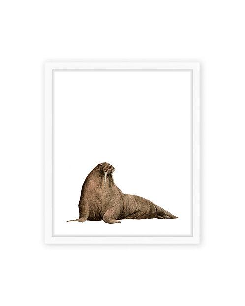 Original Walrus