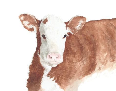 Calf Portrait for Kim