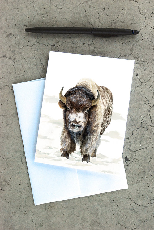 Snowy Buffalo Card