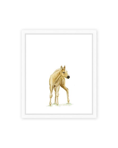 Baby Horse Print