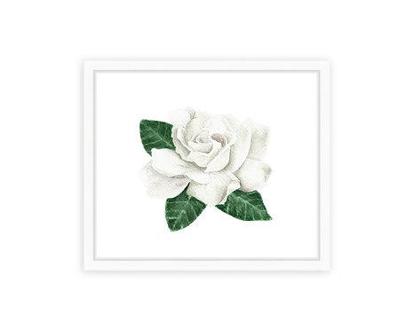 Gardenia Print
