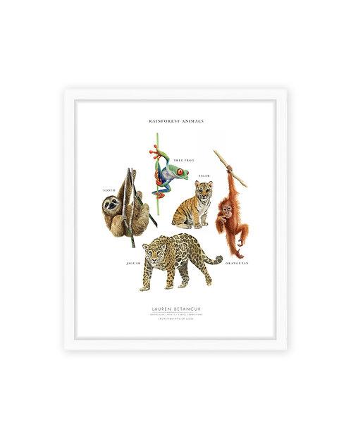 Rainforest Animals Print