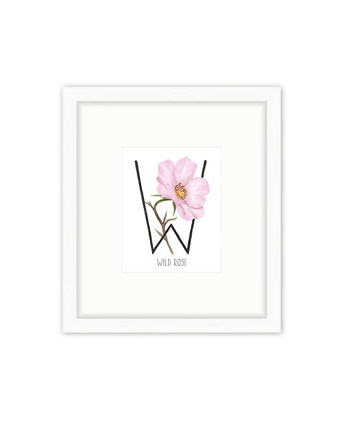 Wild Rose Letter