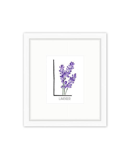 Lavender Letter
