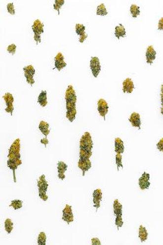 UW marijuana