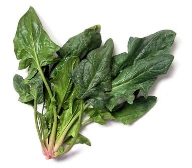 ISPANAK- Spinacia oleracea