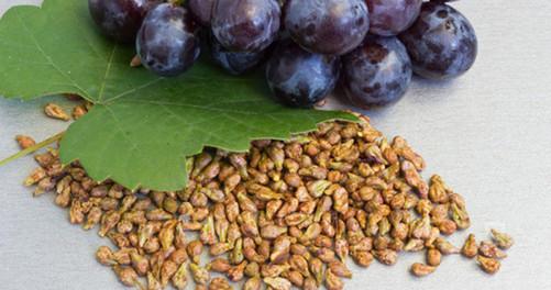 SİYAH ÜZÜM ve ÇEKİRDEĞİ- Vitis vinifera