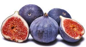 İNCİR- Ficus carica