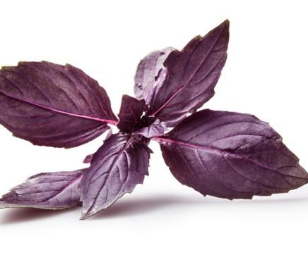 REYHAN- Ocimum basilicum