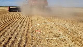 straw-dropping_1200.jpg