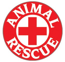Animal Rescue of the Month