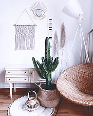 Cactus%20and%20Interior%20love%20-%20Ple