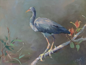 """""""Young Blue Heron"""" Oil on Panel 14"""" x 18"""""""