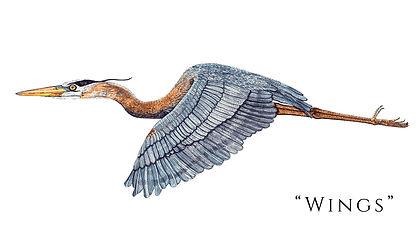 Wings - title.jpg