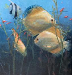 """""""Swim with the Fish"""" Oil on Board 36"""" x 36"""""""
