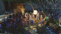 Lupinas garden
