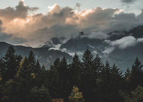 Alpe dennenbos bergen zon.jpg