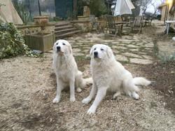 Leon e Luce - pastori maremmani