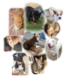 dog%20%26%20cat%20collage_edited.png