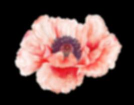Gorgeous Poppy Elements 2 - by AurAandTh
