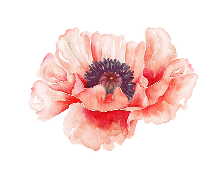 Gorgeous Poppy Elements 2 - by AurAandTh
