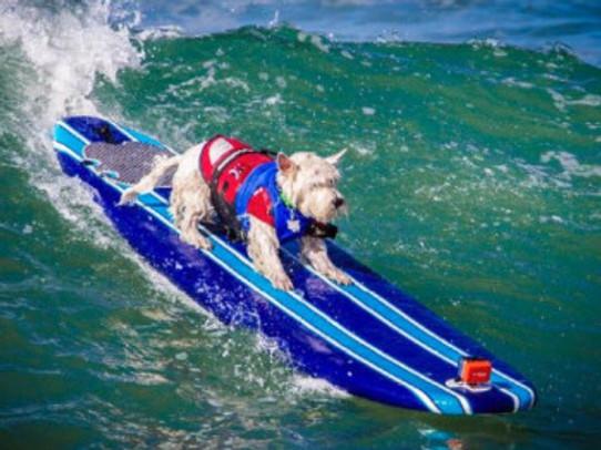 dogsurfing