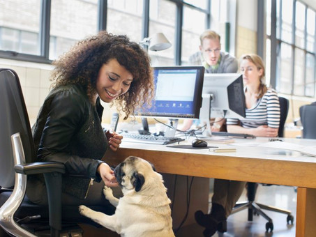 Why Bringing Your Dog to Work is Great for (Almost) Everyone