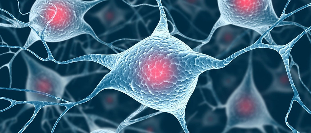 stem-cell_spinalcord_A