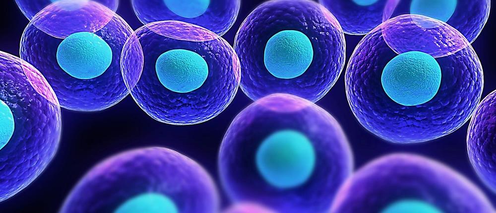 stem-cell-11-1400x600