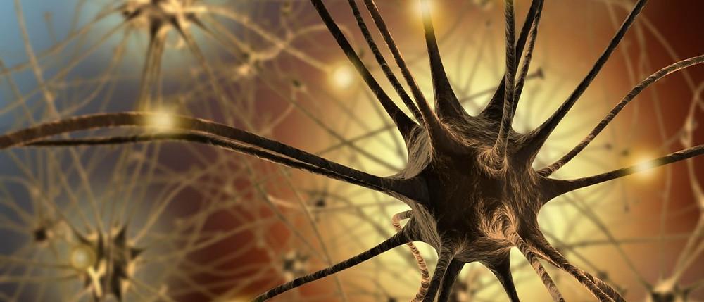 Neuron21-1400x600