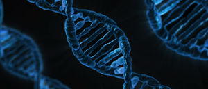 genome.png