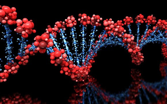 Researchers-Discover-Genes-for-a-Longer-Healthier-Life