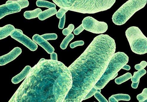Bacteria_Antibiotics