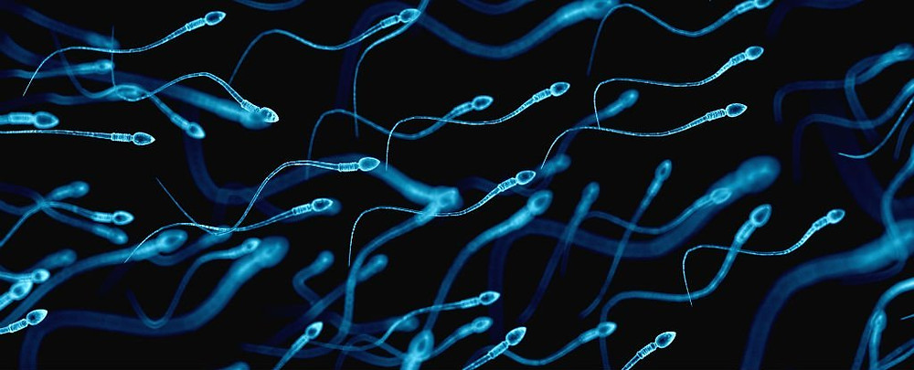 https://i2.wp.com/www.sciencealert.com/images/articles/processed/sperm-cells_1024.jpg