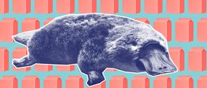 platypus-milk-1-1400x600