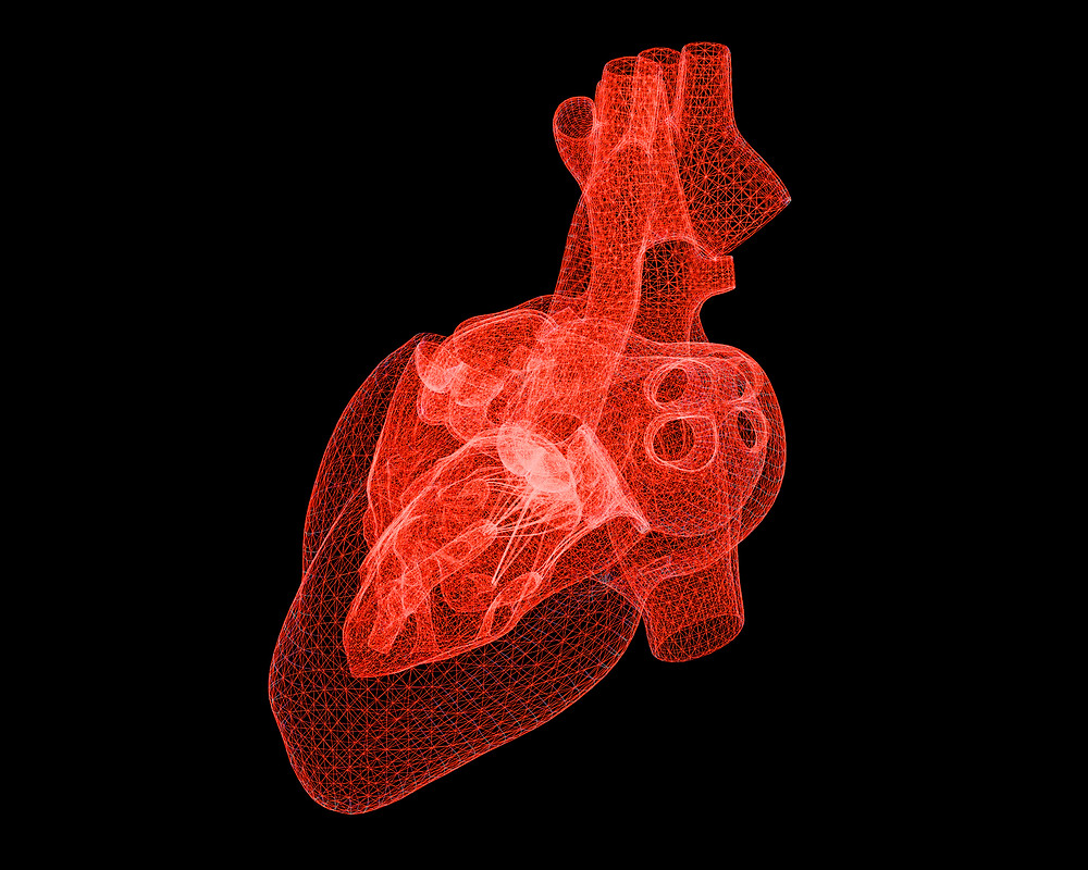 Digital Human Heart