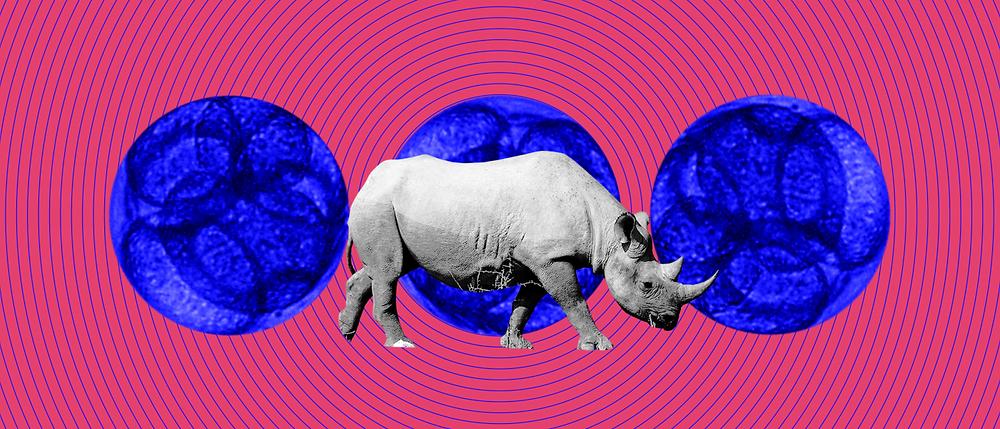 rhino-embryo-1400x600